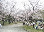 桜032901.jpg